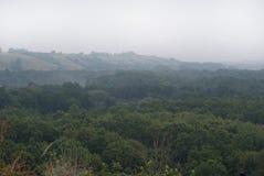 Wczesna mgła nad floodplain rzeka, przerastający z pierwszym planem obrazy royalty free