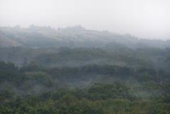 Wczesna mgła nad floodplain rzeka, przerastający z pierwszym planem obraz stock