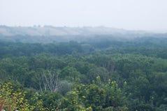 Wczesna mgła nad floodplain rzeka, przerastający z pierwszym planem obrazy stock