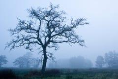 wczesna mgły ranek drzewa zima Zdjęcie Stock