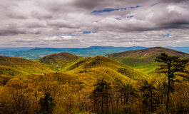Wczesna wiosna barwi w Blue Ridge Mountains w Shenandoah parku narodowym, Virginia. Obraz Royalty Free