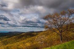 Wczesna wiosna barwi w Blue Ridge Mountains, widzieć w Shenandoah parku narodowym, Virginia. Zdjęcie Royalty Free