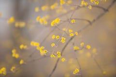 wczesna wiosna liści, Obraz Stock
