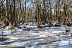 Wczesna wiosna na bagnie w lesie Obrazy Stock