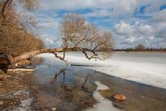 Wczesna wiosna na jeziorze Obrazy Royalty Free
