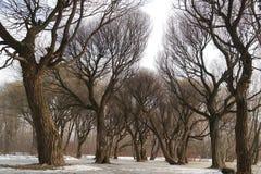 wczesna wiosna w miasteczku Zdjęcie Stock