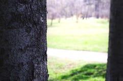 Wczesna wiosna w miasto parku obraz royalty free