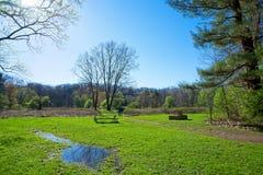 Wczesna wiosny łąka w północnym wschodzie Ohio obraz royalty free
