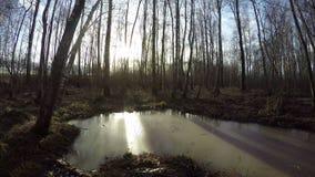 Wczesna wiosny woda w marshy brzoza lesie, czasu upływ 4K zbiory wideo