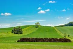 Wczesne lato krajobraz Zdjęcie Royalty Free