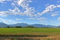 Wczesne uprawy na Dolinnym ziemia uprawna areale Zdjęcia Stock