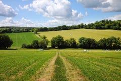 wczesnego anglików krajobrazu wiejski lato obrazy stock