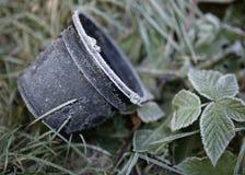 WCZESNEGO PORANKU mróz NA rośliien BRAMBLES I garnku Fotografia Stock