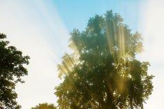 Wczesnego poranku powstającego słońca promienie przez liści drzewo Fotografia Royalty Free