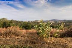 Wczesnego poranku słońca światło na południowego Kalifornia wzgórzach w jesieni, Zdjęcia Stock