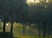 Wczesnego poranku słońce leje się przez mgłowego obszaru zalesionego z trawiastą podłogą w Południowym Floryda, Stany Zjednoczone fotografia stock