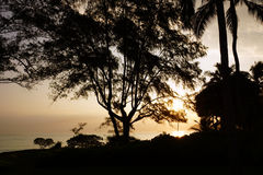 Wczesnego Poranku wschód słońca przez drzew nad oceanem i wyspą Obraz Stock