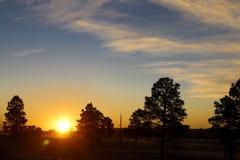 Wczesnego poranku wschód słońca w lesie obrazy royalty free