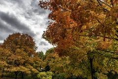Wczesnej jesieni kolorowi drzewa w parku Fotografia Royalty Free