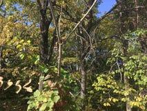Wczesnej jesieni lasowi drzewa, gałąź Obraz Stock