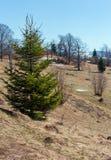 Wczesnej wiosny Karpackie góry zdjęcie royalty free