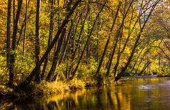 Wczesny jesień kolor wzdłuż proch rzeki w prochu, Spada Obrazy Stock
