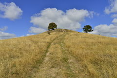 Wczesny jesień krajobraz z wzgórzem, drzewami i wiejską drogą, Zdjęcie Royalty Free