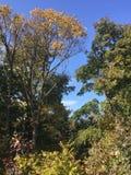 Wczesny jesień las, drzewa Zdjęcie Royalty Free