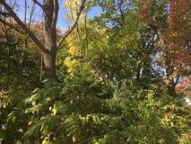 Wczesny jesień las, drzewa Fotografia Royalty Free