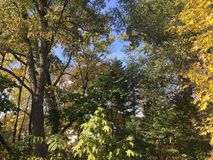 Wczesny jesień las, drzewa Obraz Stock