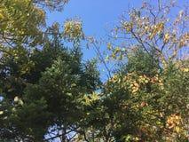 Wczesny jesień las, drzewa Obrazy Stock