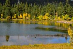 Wczesny jesieni niebo, drzewa i nawadniamy odbicie Zdjęcia Royalty Free