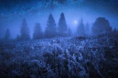 Wczesny marznący ranek z hoarfrost na trawie zdjęcie royalty free