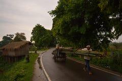 Wczesny morning-Assam-India Zdjęcie Stock