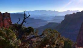 Wczesny Poranek Canyonland Vista zdjęcie stock