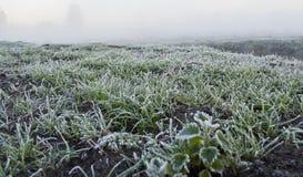 Wczesny poranek mgła, mróz w polu na zielonych roślinach, wiosny tło i Zdjęcie Stock