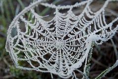 Wczesny poranek mgła, mróz w polu na zielonych roślinach, wiosny tło i, pajęczyny w Obrazy Stock