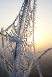 Wczesny poranek mgła, mróz w polu na zielonych roślinach, wiosny tło i, pajęczyny w Fotografia Stock