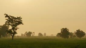 Wczesny poranek mgła w ryżowym polu, czasu upływ zdjęcie wideo