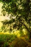 Wczesny poranek na sposobie farmfield Fotografia Royalty Free