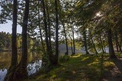 Wczesny poranek przy jeziorem nawadnia fotografia royalty free