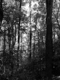 Wczesny Poranek w górach na Appalachain śladzie Zdjęcie Stock