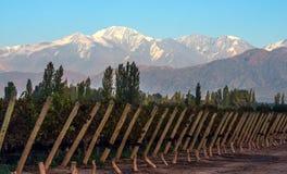 Wczesny poranek w opóźnionym jesień winnicy, Mendoza Fotografia Royalty Free