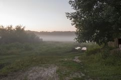 Wczesny poranek w polu z jesieni mgłą i kroplami w powietrzu woda Odcienie brąz Nic mógł widzieć daleko Beauti zdjęcia stock