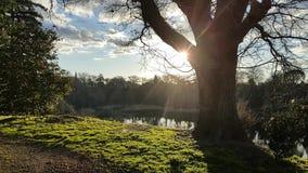 Wczesny poranek z słońcem pęka przez drzewa zbiory