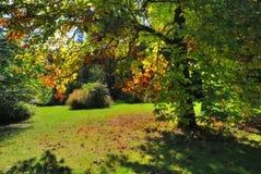 Wczesny spadku ulistnienia jesieni drzewo Zdjęcie Stock