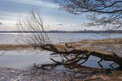 Wczesny wiosna krajobraz na rzece i drzewa bez liści na chmurnym dniu i sunnu obrazy stock