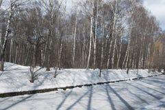 Wczesny wiosna krajobraz z parkiem fotografia stock