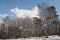 Wczesny wiosna krajobraz z parkiem obraz royalty free