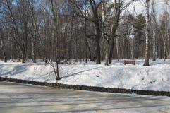 Wczesny wiosna krajobraz z parkiem fotografia royalty free